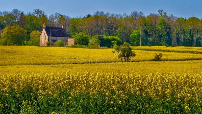 Ферма Cotswolds, Англия стоковая фотография