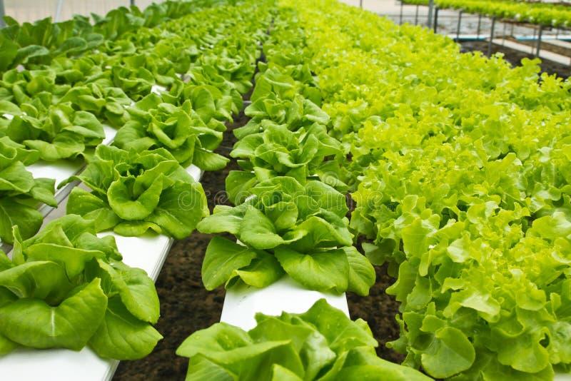ферма hydroponic стоковое изображение rf