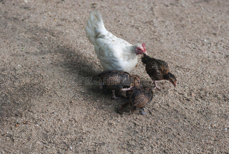 ферма ii семьи стоковая фотография rf
