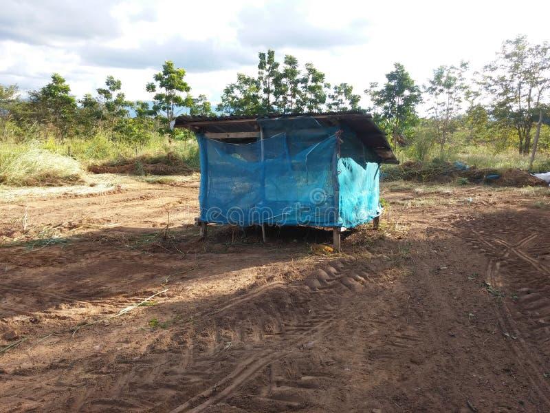 Ферма n стойки дома курицы одна стоковое фото rf