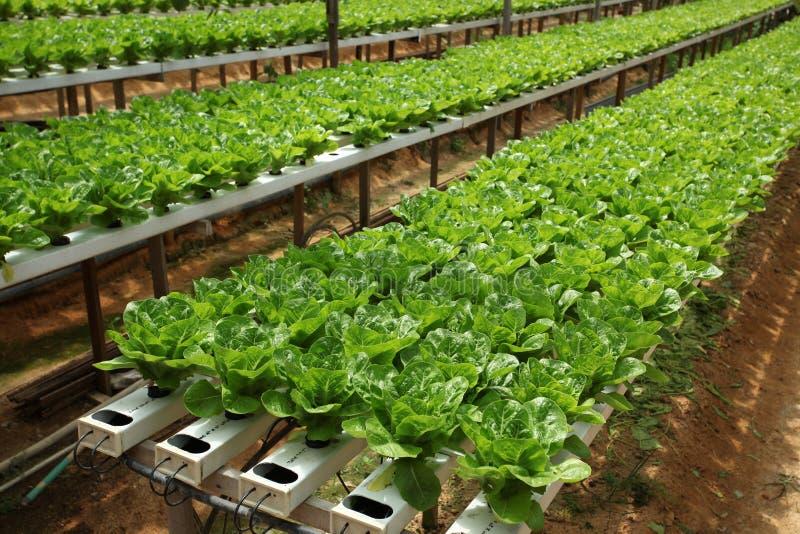 Ферма Vegatable стоковое изображение