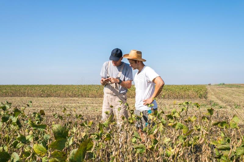 Фермеры в полях сои стоковые фотографии rf