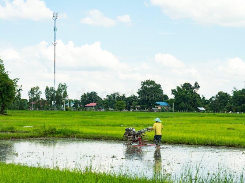 Фермеры делают обрабатывать землю в полях риса стоковое фото