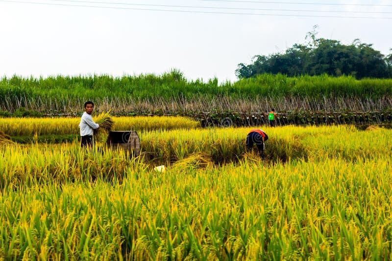 Фермеры риса в фарфоре стоковая фотография rf