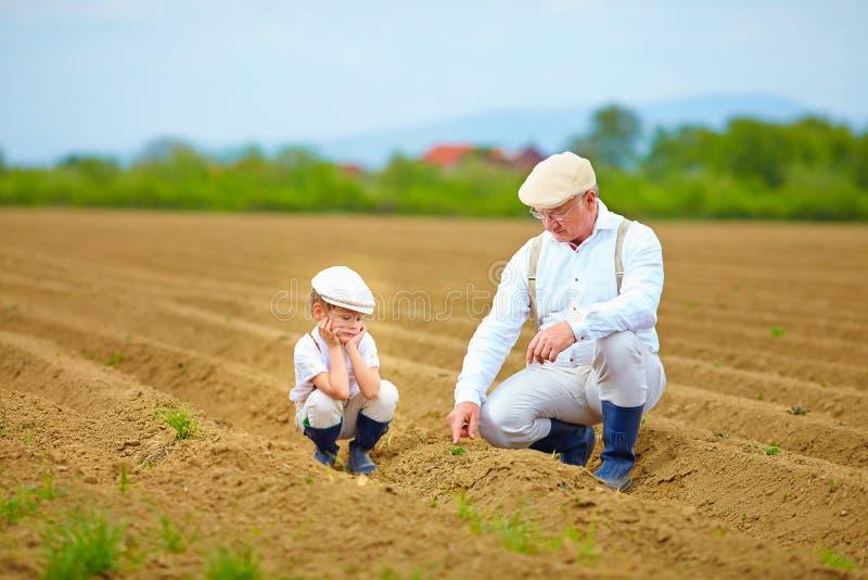 Фермеры, семья на их земле, проверяя выращивание растения стоковая фотография