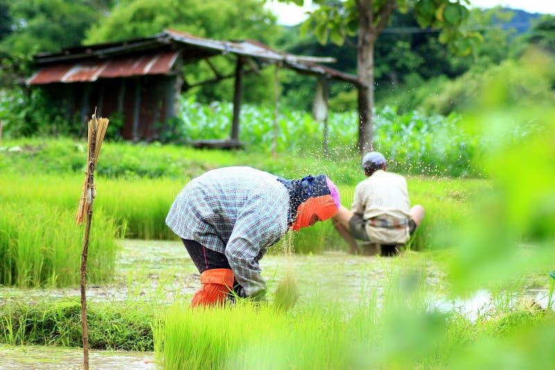 Фермеры, фермеры от Таиланда стоковая фотография rf