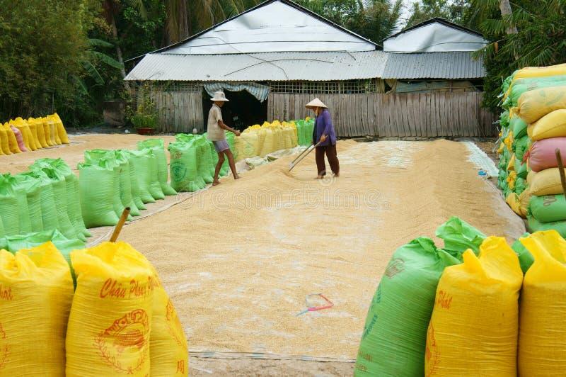 Фермер Азии, сухой рис, сумка падиа, хранение стоковые изображения