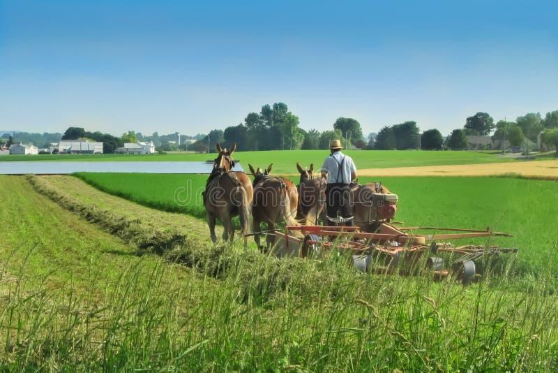 Фермер Амишей в Ланкастере, PA стоковые фотографии rf