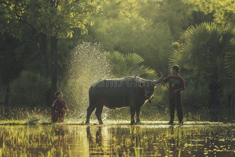 Download Фермер буйвола ванны стоковое фото. изображение насчитывающей выражение - 57830856