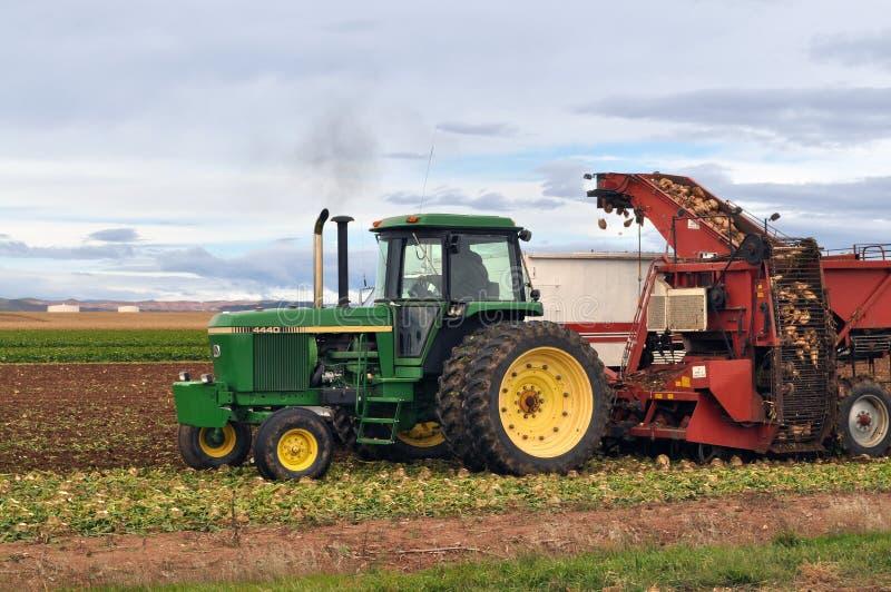 Фермер в зеленом тракторе выкапывая и жать свекловицы стоковые фото