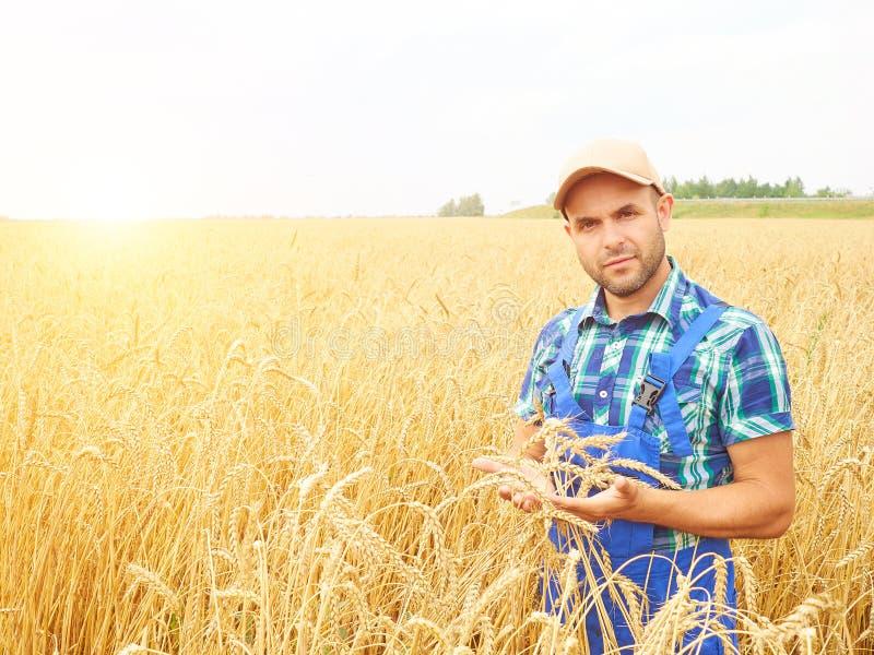 Фермер в рубашке шотландки контролировал его поле Показывает пшеницу h стоковые изображения