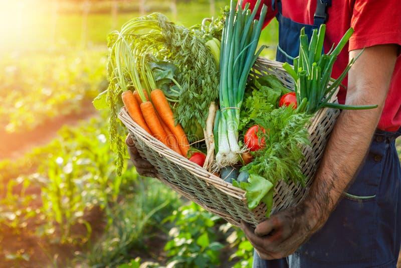 Фермер держа плетеную корзину с овощами стоковые изображения