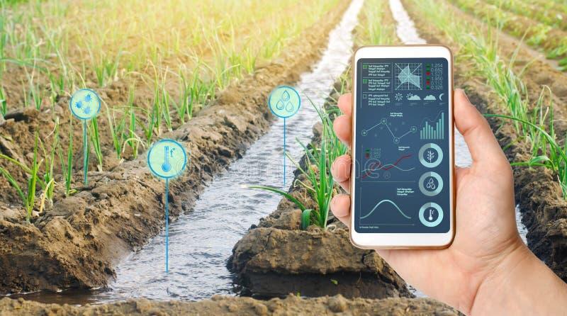 Фермер держит смартфон на предпосылке поля с плантацией лук-порея Аграрный запуск Автоматизация и качество урожая стоковые фото