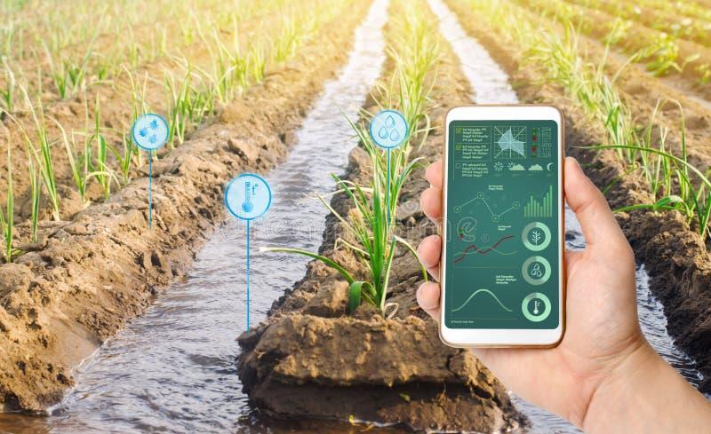 Фермер держит смартфон на предпосылке поля с плантацией лук-порея Аграрный запуск Автоматизация и качество урожая стоковое фото rf