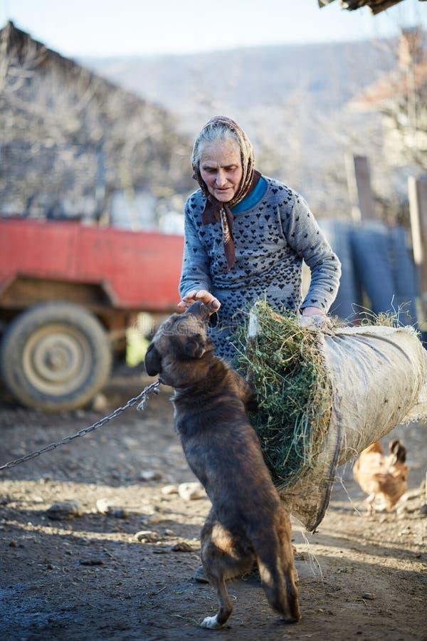 Фермер играя с собакой стоковые изображения