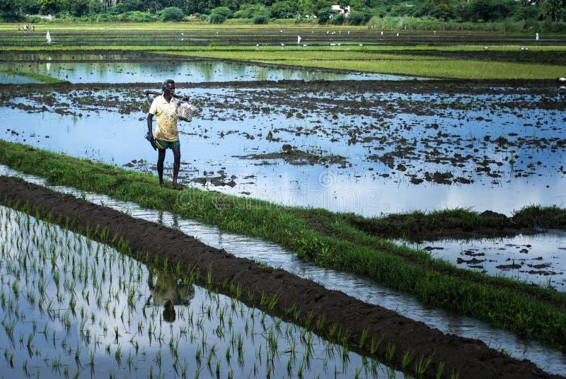 Фермер идя для работы в земле земледелия стоковое фото rf