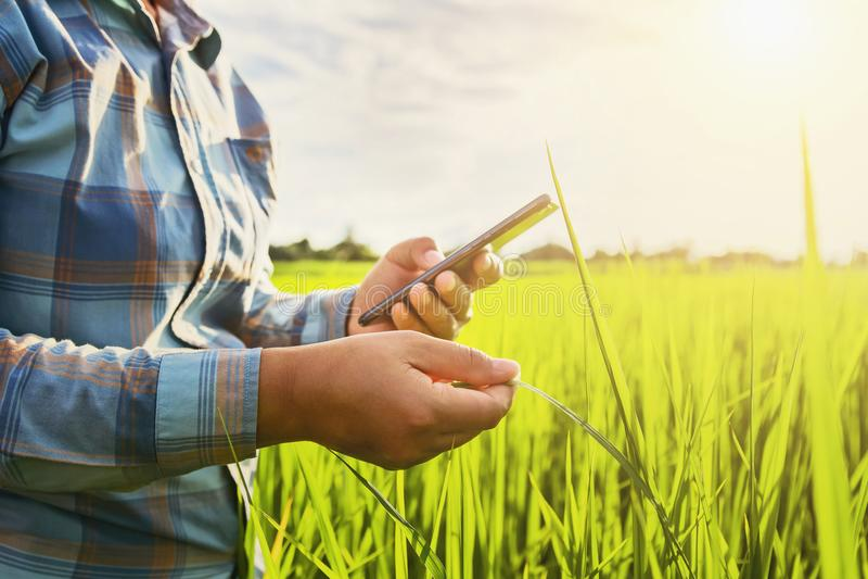 фермер используя мобильный проверяя отчет земледелия стоковые изображения rf