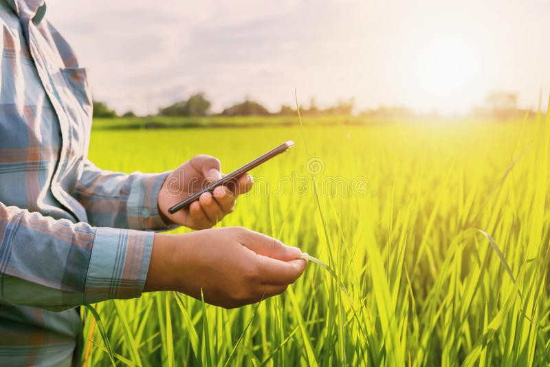 фермер используя мобильный проверяя отчет земледелия стоковые фотографии rf