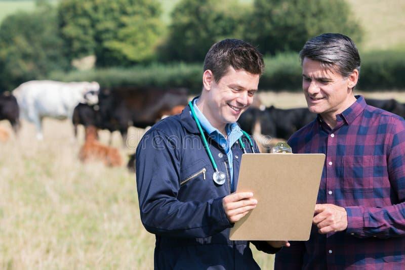 Фермер и ветеринар в поле при скотины смотря доску сзажимом для бумаги стоковое фото