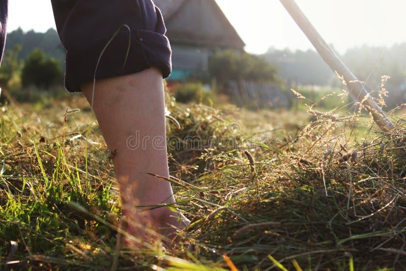 Фермер и вкосую на зеленом поле стоковые фотографии rf