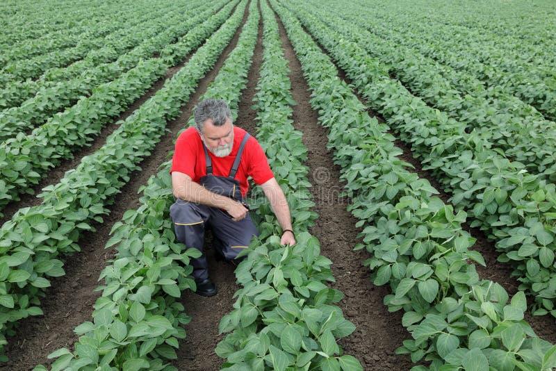 Фермер или agronomist в поле сои стоковое фото rf