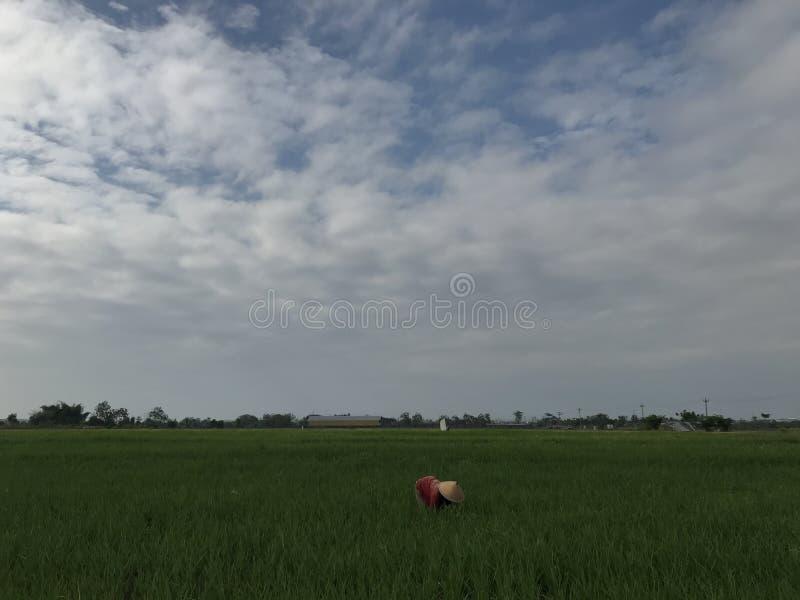 Фермер на рисовых полях стоковые фото