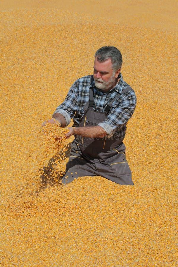 Фермер на стоге мозоли после сбора стоковое изображение