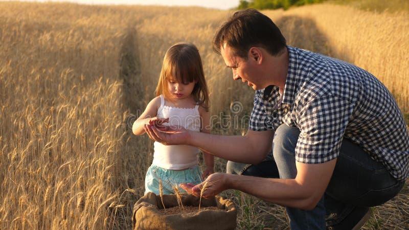 Фермер отца играет с меньшим сыном, дочерью в поле зерно пшеницы в руках ребенка Папа agronomist и стоковое фото rf
