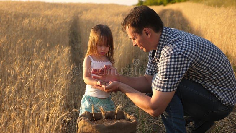 Фермер отца играет с меньшим сыном, дочерью в поле зерно пшеницы в руках ребенка Папа agronomist и стоковая фотография