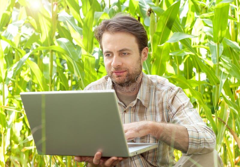 Фермер перед кукурузным полем работая на портативном компьютере стоковая фотография rf