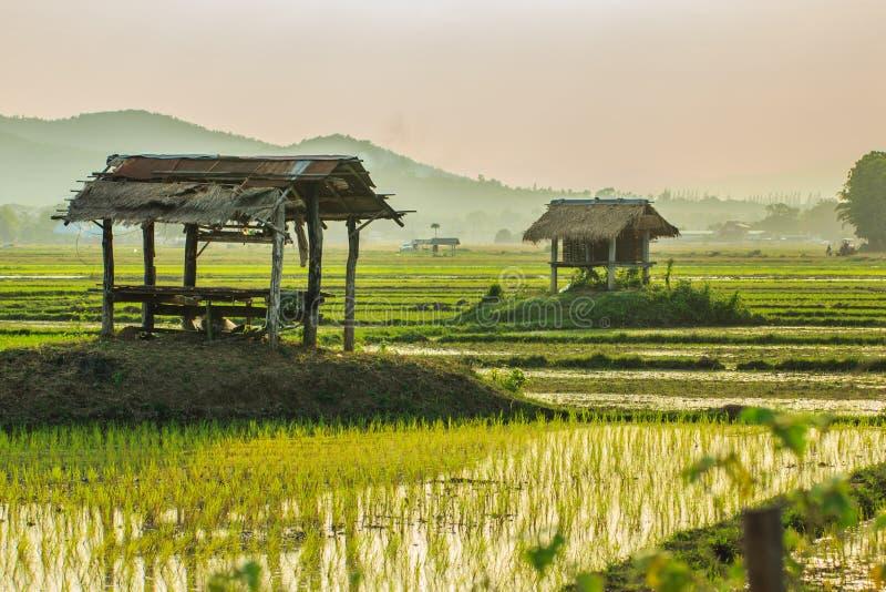 Фермер, поле стоковые фотографии rf