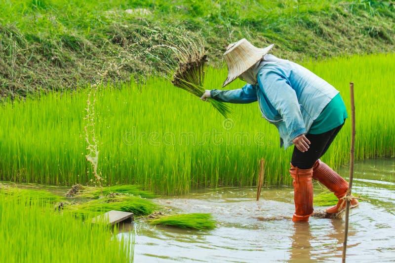 Фермер, поле стоковое изображение