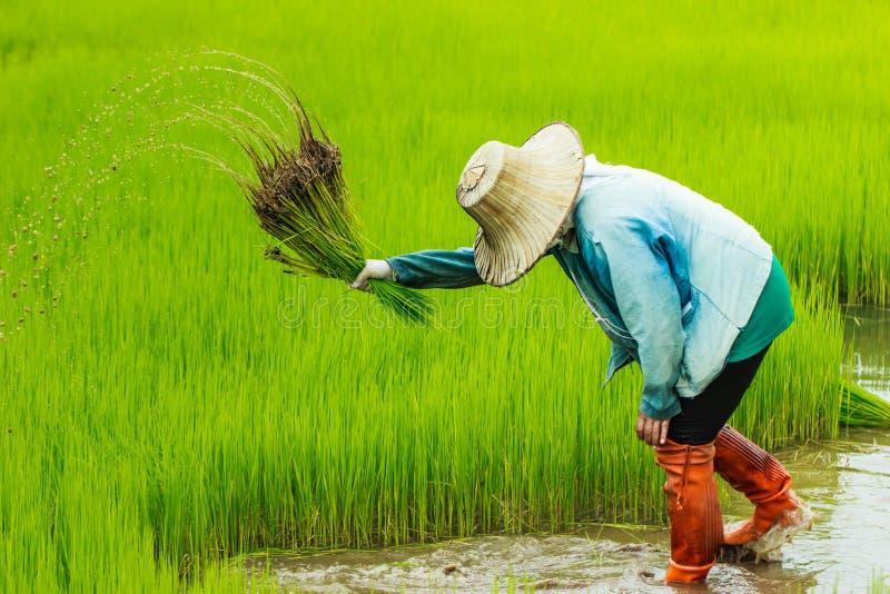 Фермер, поле стоковое фото rf