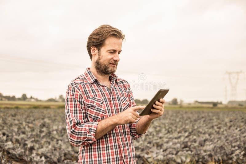 Фермер работая на использовании таблетки перед полем капусты стоковое изображение rf