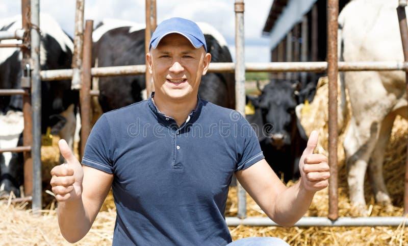 Фермер работая на ферме с молочными коровами стоковое фото