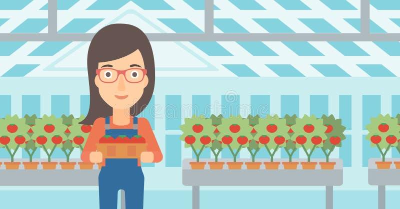 Фермер собирая томаты иллюстрация штока