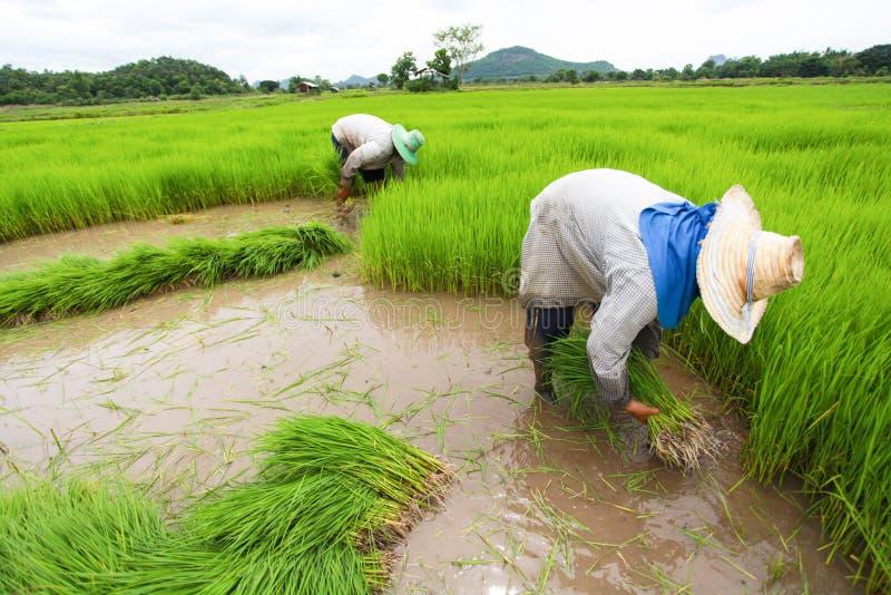 Фермер стоковая фотография rf