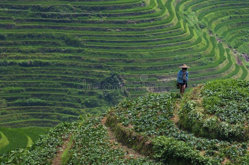 Фермер Locar работая в полях риса террасных около деревни Dazhai в Китае стоковые фотографии rf