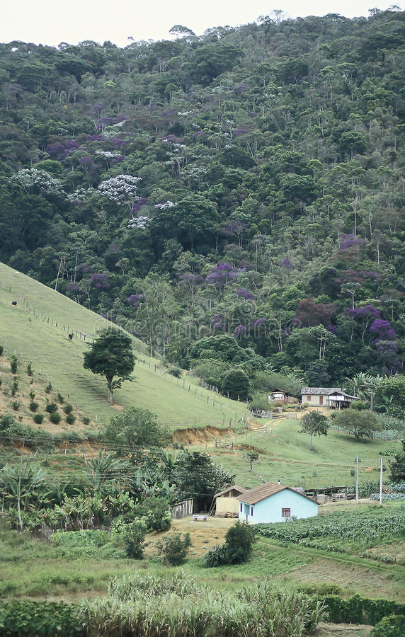 Фермы и обезлесение в южной Бразилии стоковые фотографии rf