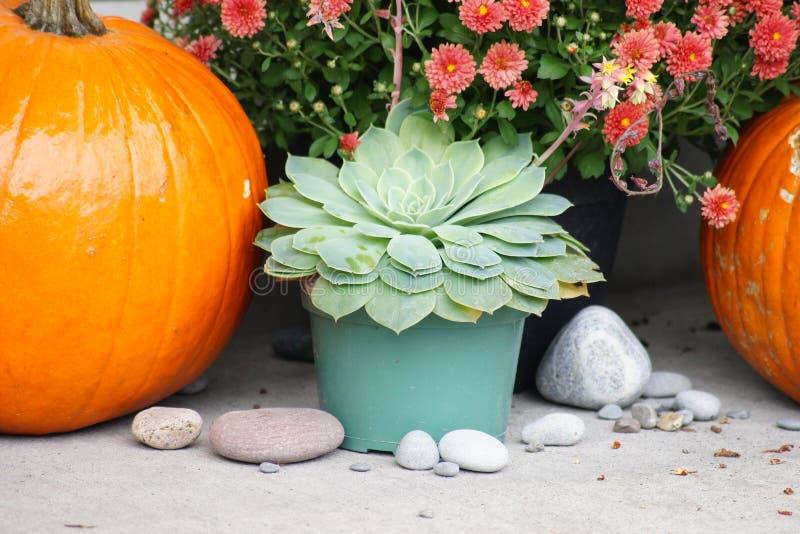 Фестивальный красочный день благодарения и Хэллоуин, стоковые изображения rf