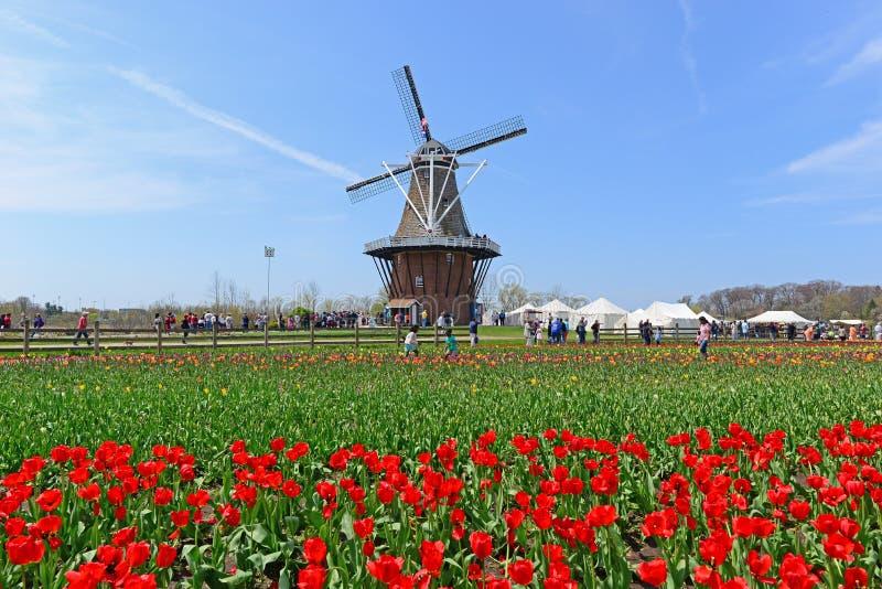 2019 фестиваль тюльпана весны Голландии, Мичиган стоковая фотография rf