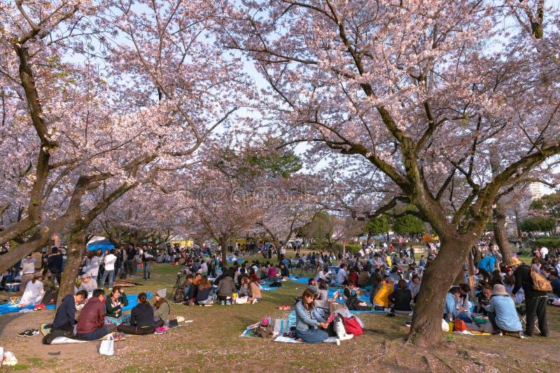 Фестиваль Shizuoka (Shizuoka Matsuri) с вишневыми цветами стоковое фото rf