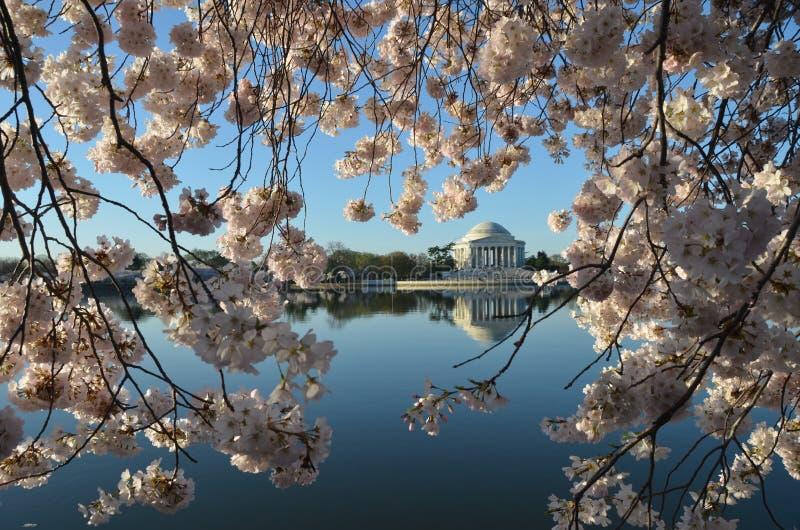 Фестиваль вишневого цвета Вашингтон, DC стоковое фото rf