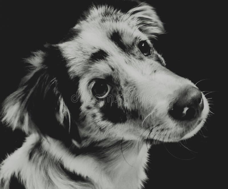 Федингмашина щенок стоковая фотография rf