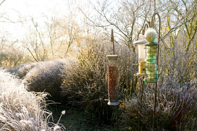Фидеры птицы со смешанными семенами в красивом саде во время замороженной зимы стоковое фото rf