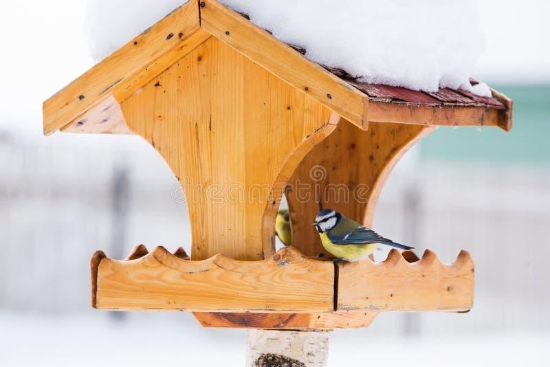 Фидер птицы с голубой синицей в зиме стоковое фото