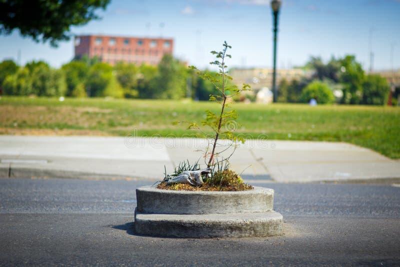 Филируйте концы припаркуйте в Портленде Орегоне, США самый малый парк стоковое изображение