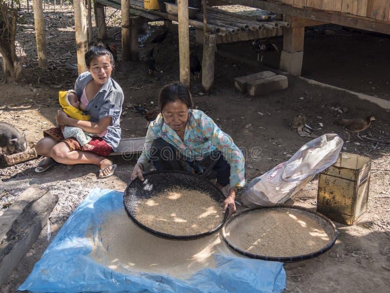 Фильтровать рис стоковые фотографии rf