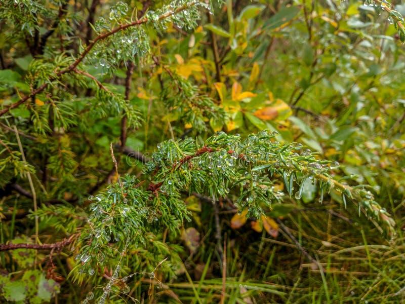 Финляндия, природа, роса, лес, трава стоковые фото