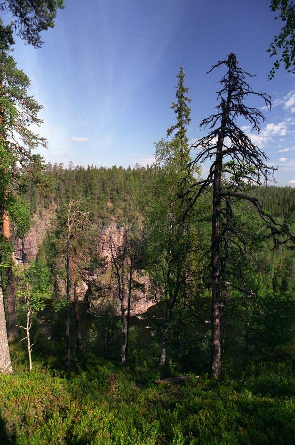 финская пуща стоковое изображение rf